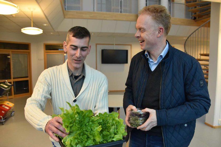 To menn med frisk salat. Foto.